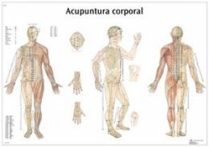 Anatomical-Chart-3B-Body-Acupuncture.jpg