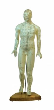 Male-Acupunture-Model.jpg